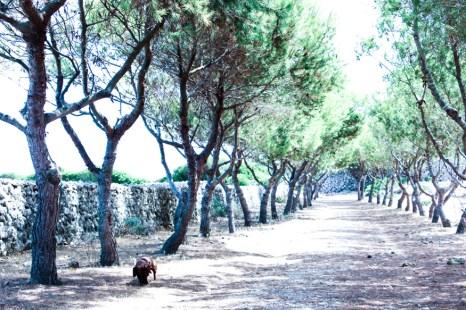 Uno de mis senderos preferidos está en San Joan de Binissaida.