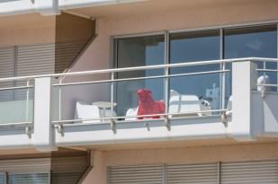 Un bulldog rojo nos vigila desde su terraza.