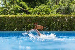 Nadando en la piscina del Relais & Châteaux Molino de Alcuneza.