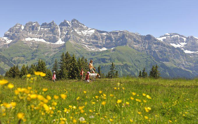 San Bernardo paseando con su familia por los Alpes suizos. Copyright by: Valais/Wallis Promotion By-Line: Valais/Wallis Promotion/Christian Perret.