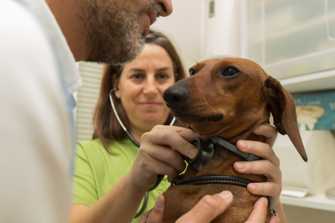 Sofía, la veterinaria de Eros, explorando a Eros antes de un viaje.
