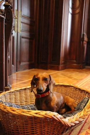 Eros disfrutando de los dog amenities que le preparó el hotel para recibirlo.