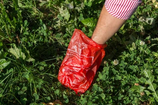 Recogiendo la caca de Eros con la bolsa roja que ofrece Austria.