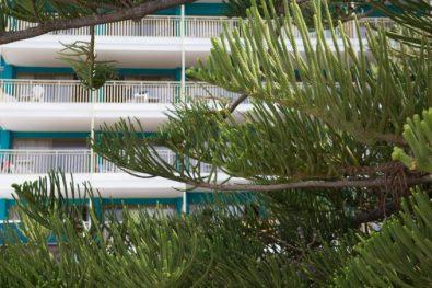 Pinos, sombrillas, tumbonas y un quiosco visten de relax el jardín del hotel.