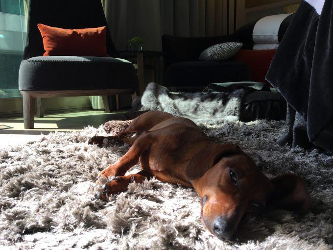 Mientras bajo a desayunar, Eros se queda disfrutando de la suite.