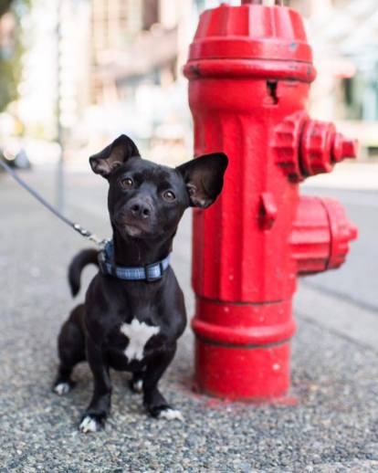 @thedogist