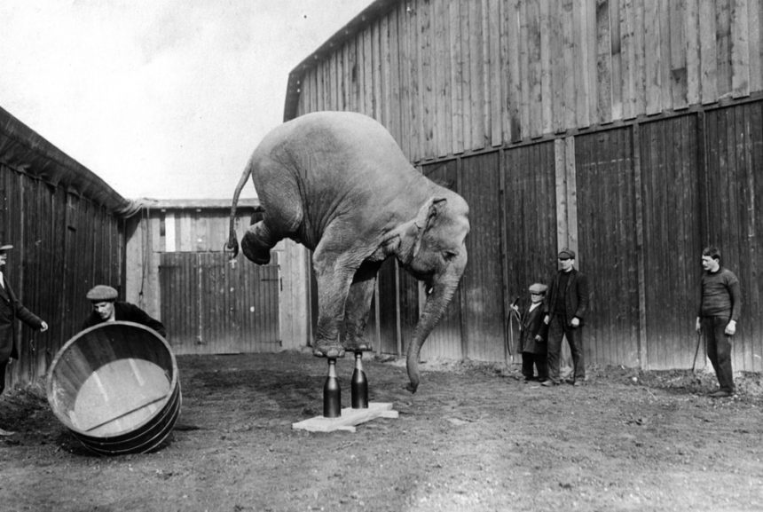 Circos sin animales