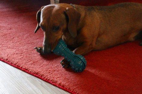 Eros con el juguete que le regaló el hotel.