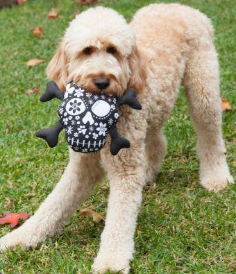 Un perro feliz con su Skull de DOGUE.