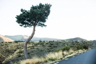 Uno de los árboles más simpáticos del camino.