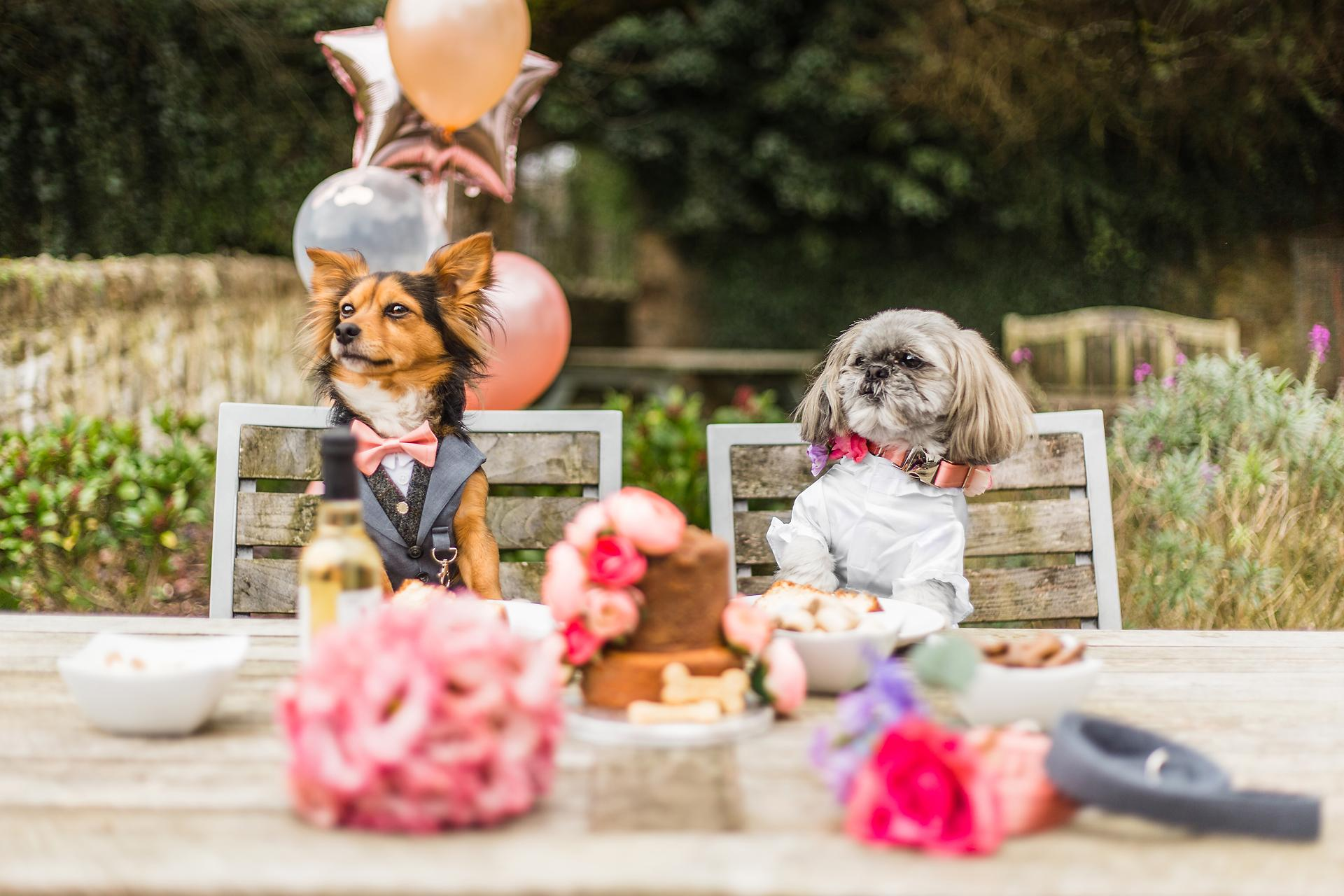 15 of the Best Dog Friendly Wedding Venues UK