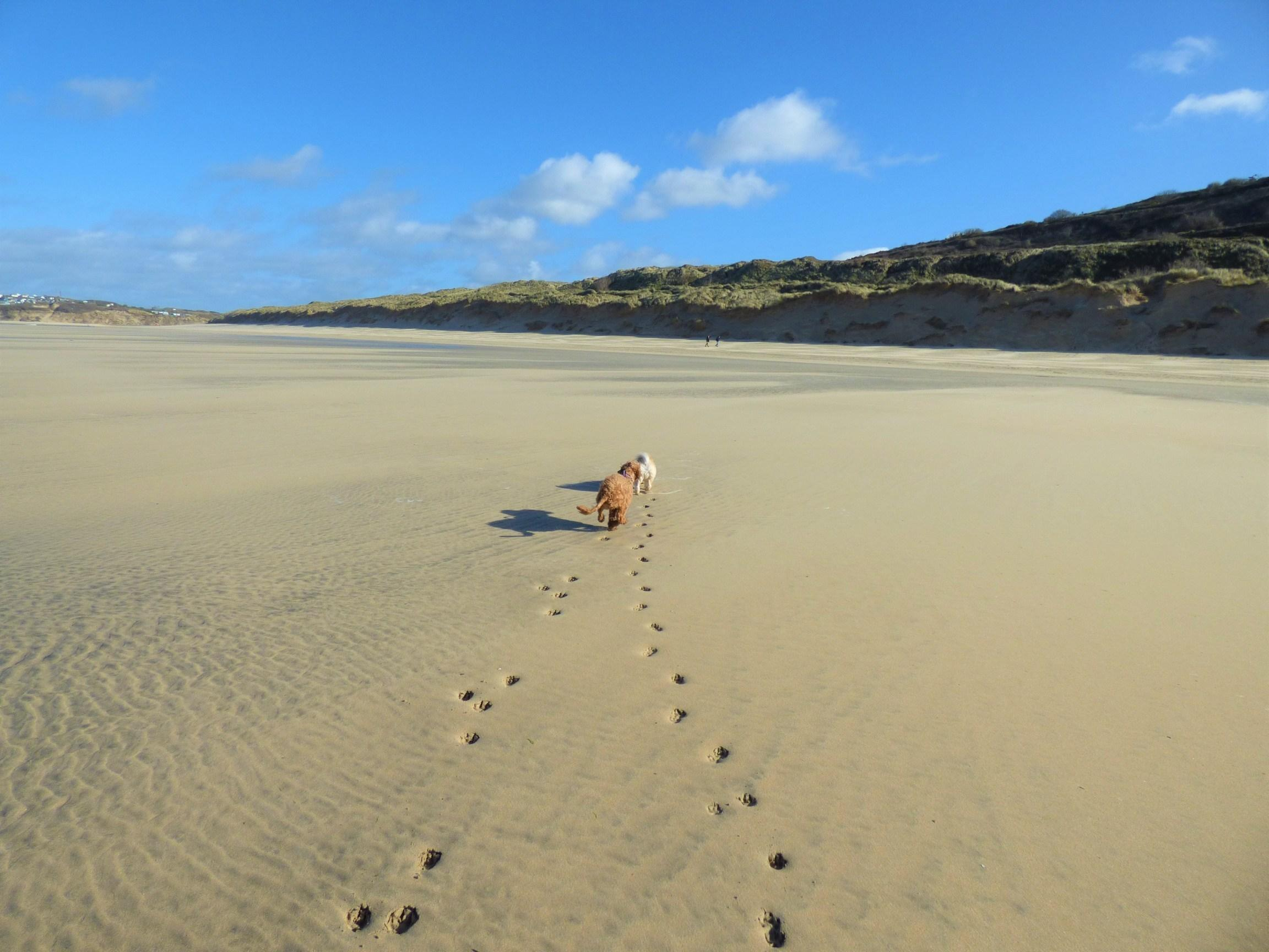 Dog Friendly Holiday Weekend in St Ives