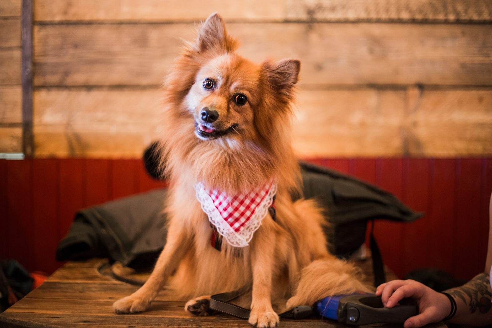 Oktoberfest For Dogs and Their Owners is Coming to Bristol