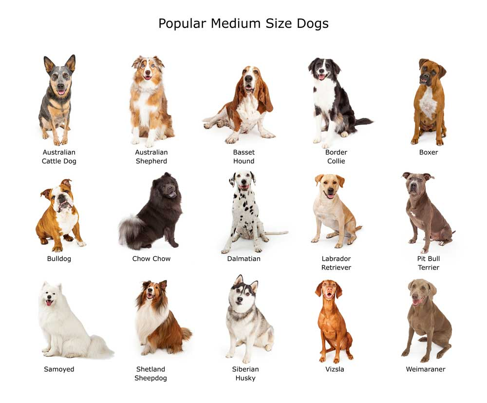 Dog Breed Finder By Picture And Some Related Aspects
