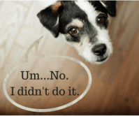 stop dog from peeing on carpet | DoggieDemeanor.com