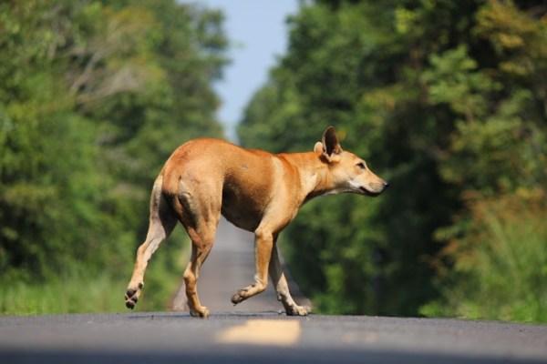 dog on path