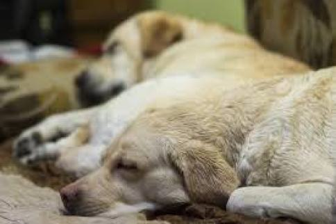 How To Tell If Your Dog Is Sad Or Upset Stunning Dog Sleep Pattern