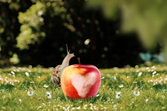 apple and slug