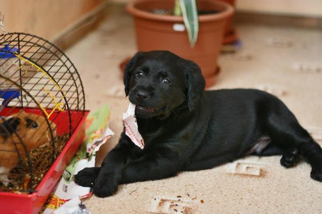 dog being destructive