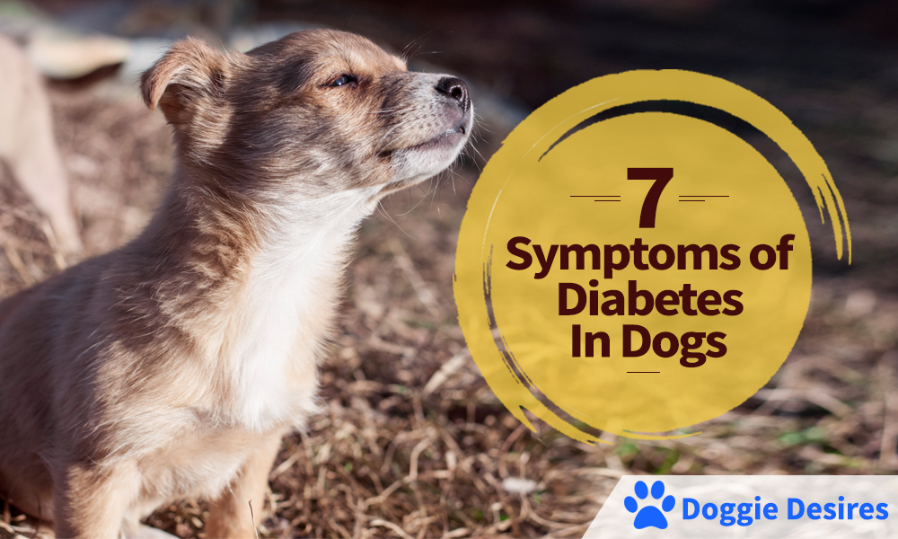 7 Symptoms of Diabetes in Dogs