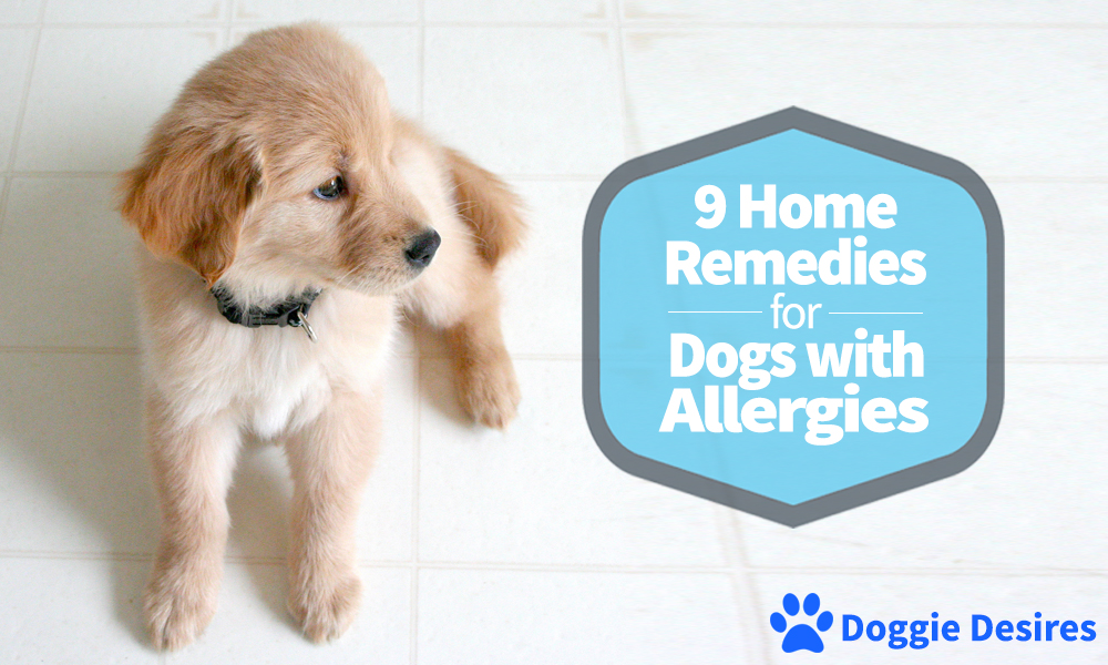 Home Remedies for Dogs with Allergies