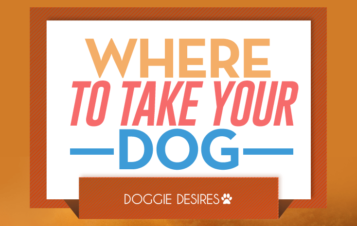 where to take your dog