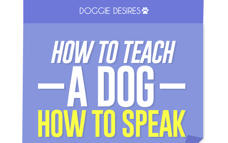 how to teach a dog how to speak