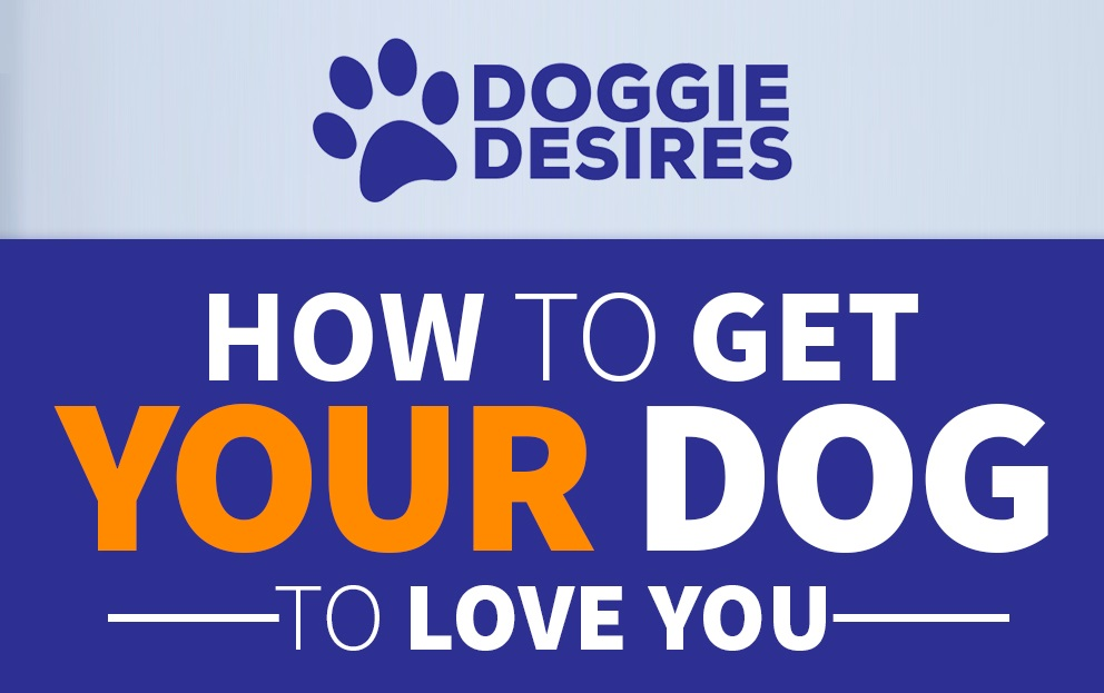 how to get your dog to love you