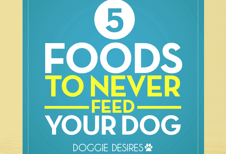 foods to never feed your dog