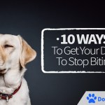 10 Ways To Get Your Dog To Stop Biting