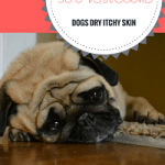 The Best Home Remedies for Dogs Dry Itchy Skin