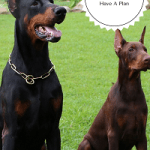 Dog  Training Goals  And Training Plan, The Basics