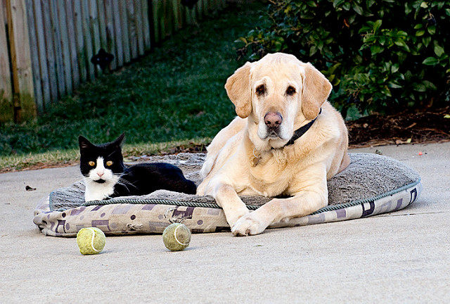 4 Best Outdoor Dog Beds A Buyers Guide 2018  doggiefetch