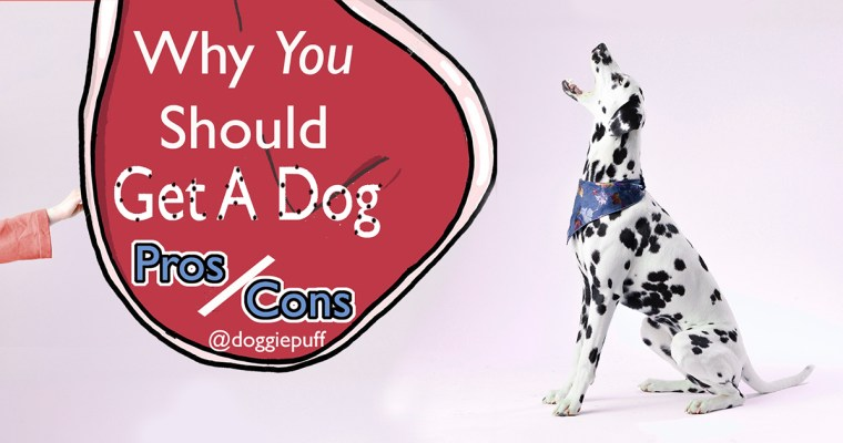 Why You should get a dog? (Pros and Cons)