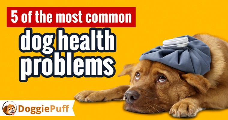 5 of the Most Common Dog Health Problems