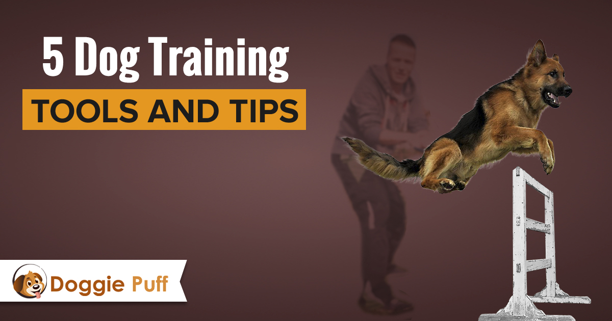 5 Dog Training Tools and Tips