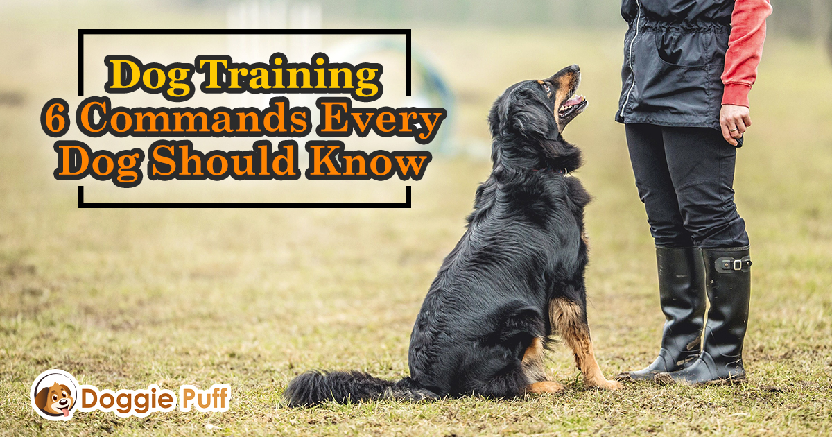 Dog Training: 6 Commands Every Dog Should Know