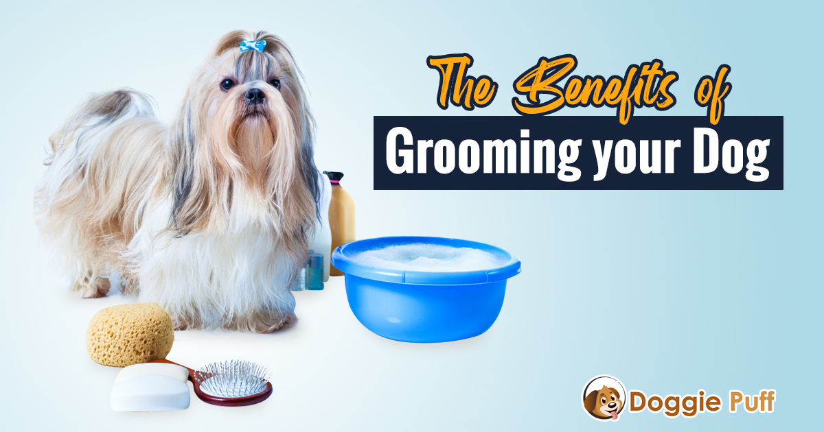 The Benefits of Grooming your Dog