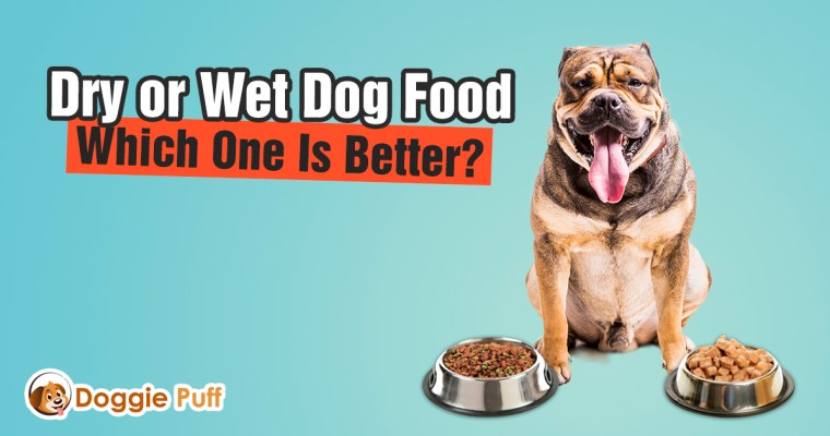 Dry or Wet Dog Food: Which One Is Better?