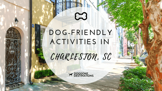 7 Of The Most Fun Dog Friendly Things To Do In Charleston