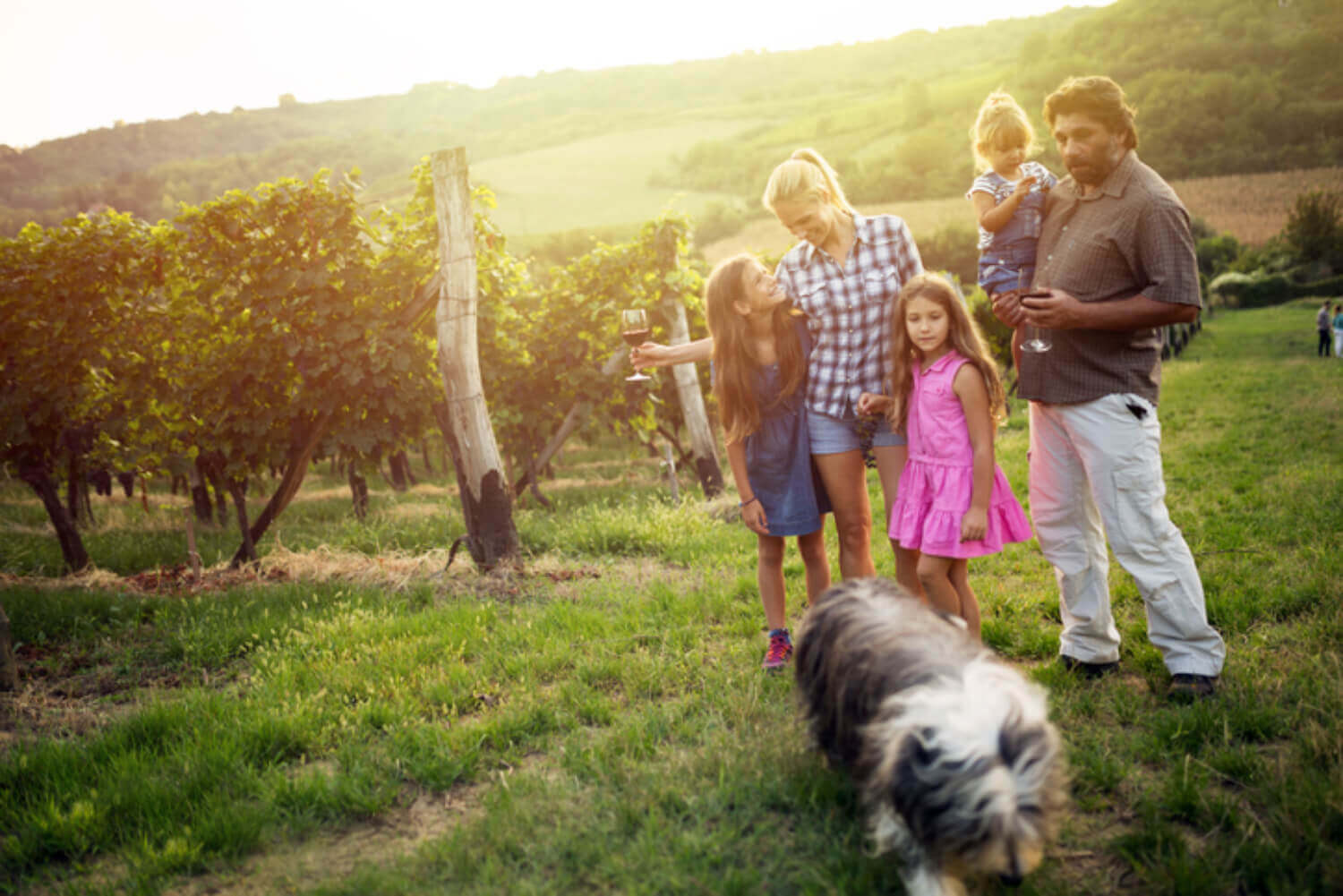 12 Of Our Favorite Dog Friendly Wineries In Virginia