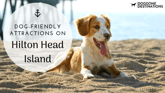 4 of our favorite dog friendly activities in hilton head island
