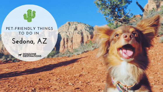 memorable and pet friendly things to do in sedona, az
