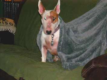 Queen of the fuzzy blanket