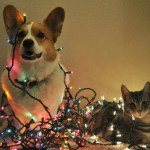 christmas hazards for pets