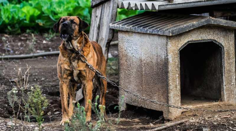Tierschutz-Hundeverordnung