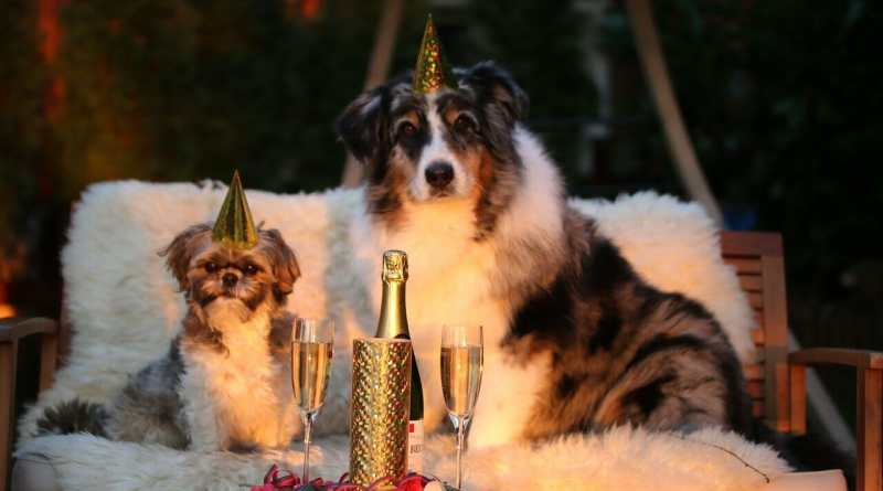 Silvester: Kein Fest für Hunde!