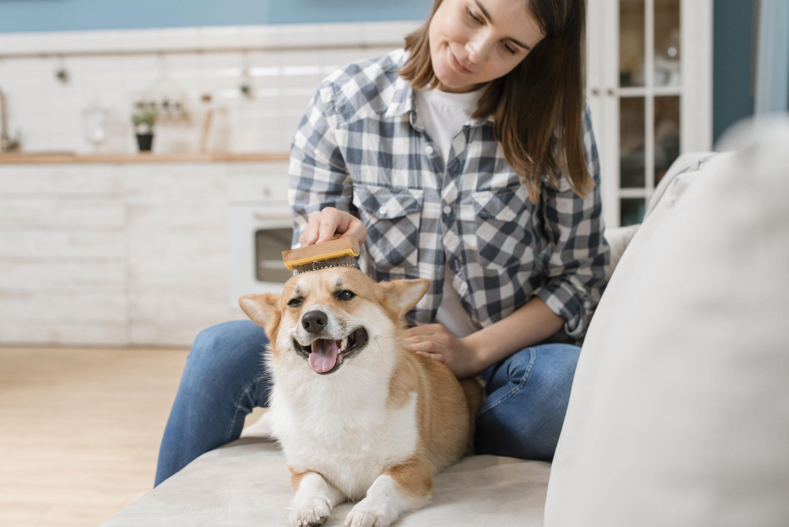 ¿Cómo eliminar los malos olores en mi perro?