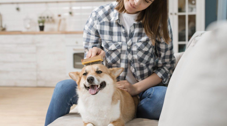 peinando perro