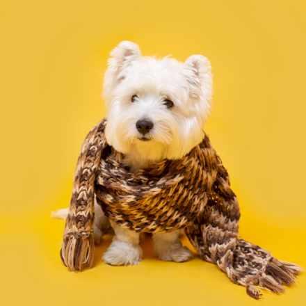cuidar mascota del frío